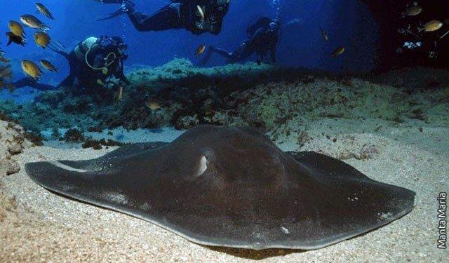 Diving – Santa Maria – Azores